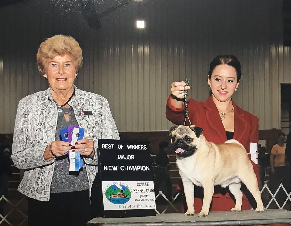 Amos' third major/new champion! (12 months old, bred-by exhibitor class)